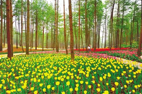 我国将制定林业草原碳汇行动方案 碳汇收益将显著提升