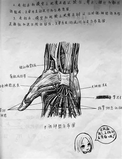女大学生手绘人体解剖图太逼真
