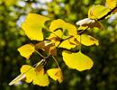 金色的秋天