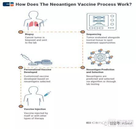 为什么新抗原疫苗可能成为下一个重大的癌症免疫治疗突破口?