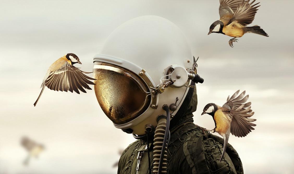 壁纸 动物 鸟 鸟类 雀 桌面 1128_666