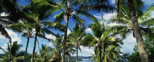 余兰兰:棕榈油库存高企&预期减产,期价以何为主?| 市场解读