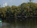 翠湖的红嘴鸥