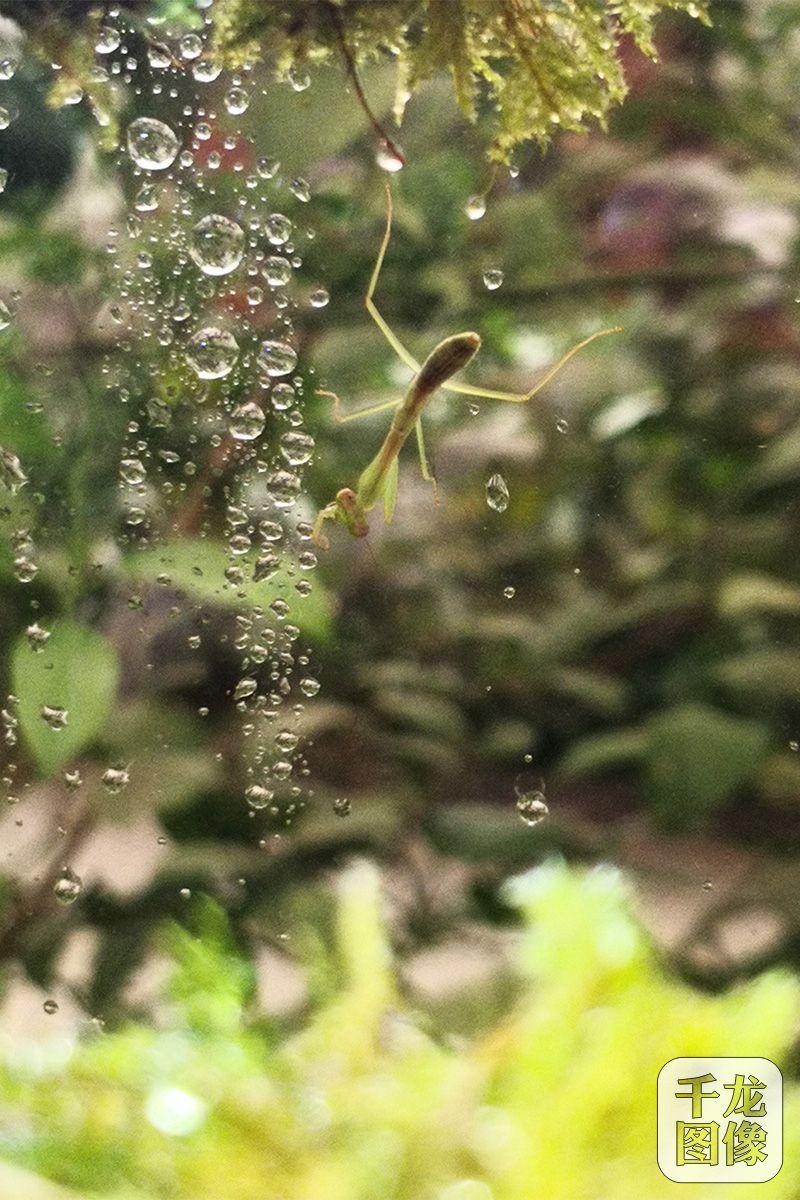 """本次""""会发光的植物园""""还引进了一大批怪异稀有的昆虫"""