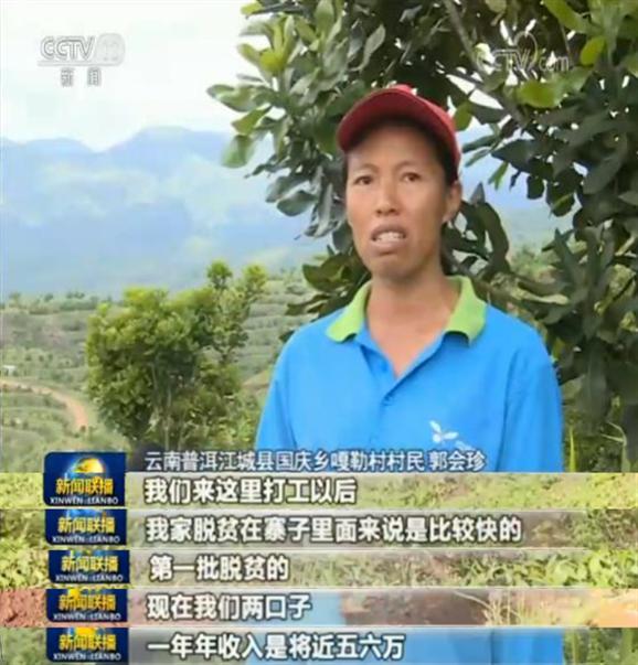 """通过采取这种""""公司+基地+合作社+农户""""的发展模式,目前江城县已经发展起茶叶、坚果、沃柑等多个产业,带动了一大批贫困群众致富。"""
