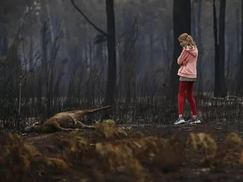 """鸟会放火!?澳大利亚大火难道是""""火鹰""""的锅?"""