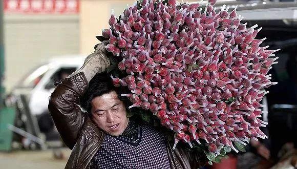 一天上百万枝玫瑰被销毁,云南鲜花网投网赚产业损失或达百亿!这些礼物成了情人节大热门