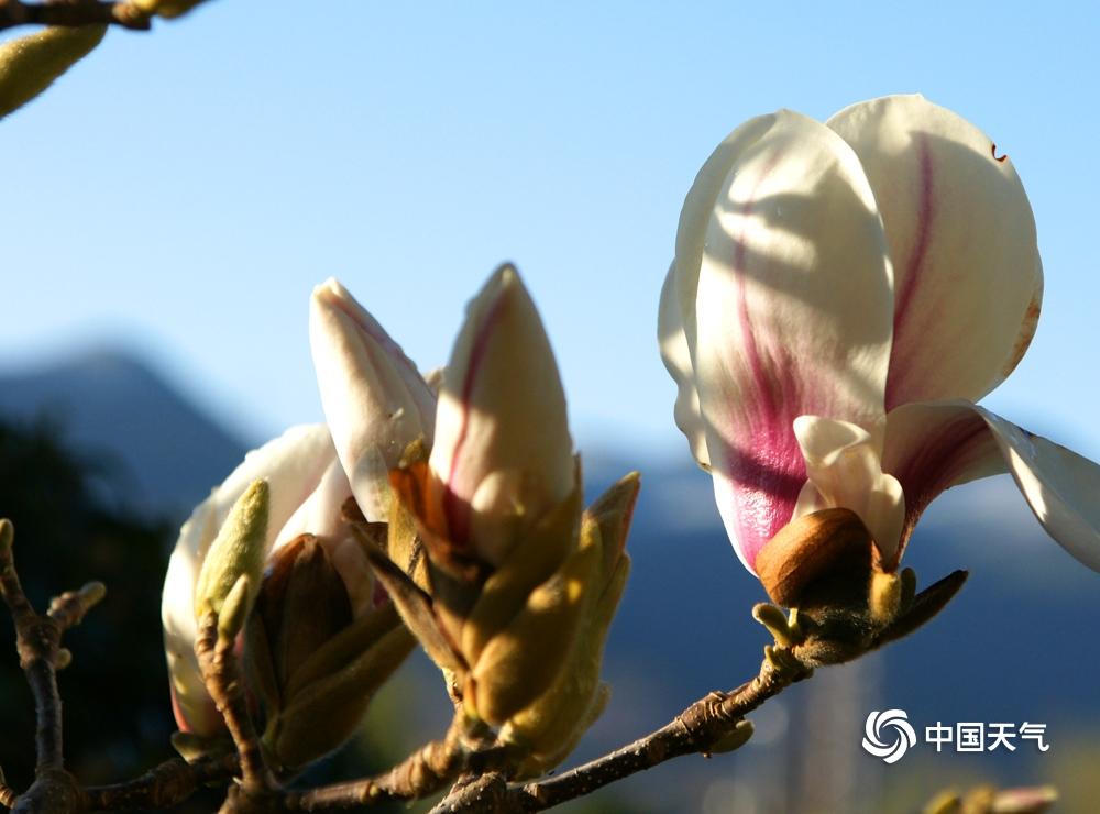 云南玉龙:春意闹玉龙 绿叶花萼上枝头