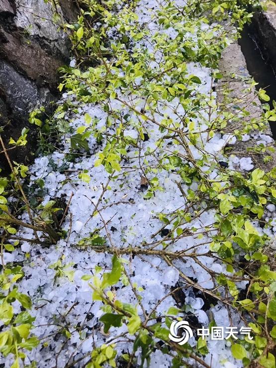 云南红河州境内连续三天降冰雹 最大似兵乓球
