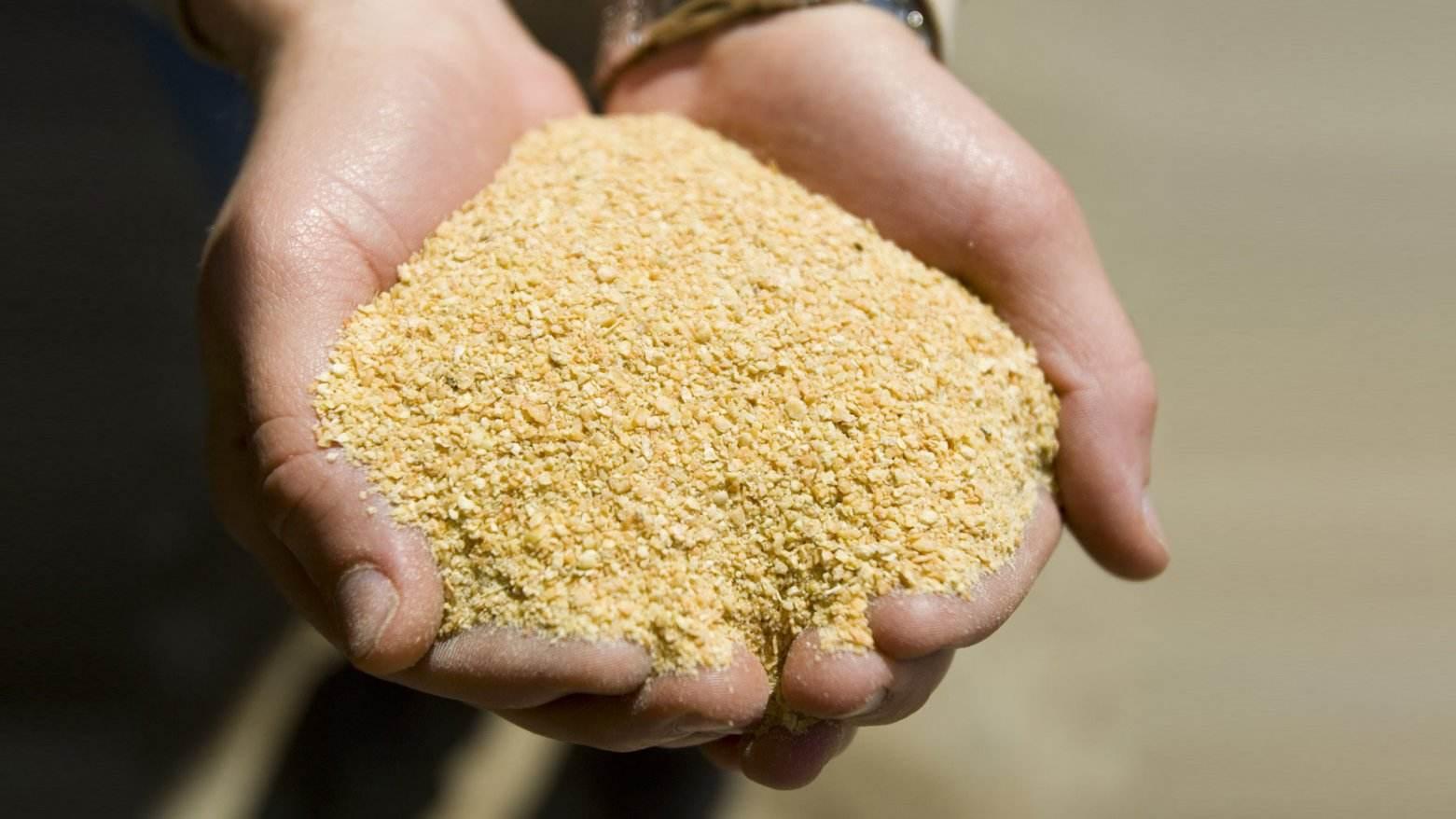 多空争夺加剧 豆粕放量上涨