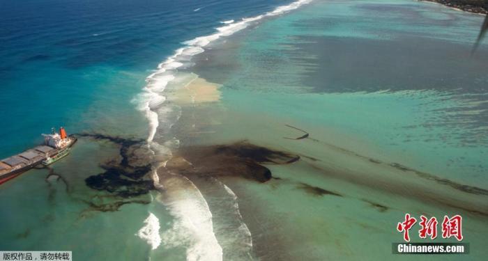 燃油泄漏污染水域环境 毛里求斯又发现七只海豚尸体