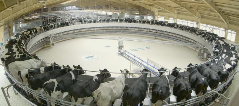 中国飞鹤自有牧场的现代化挤奶大厅