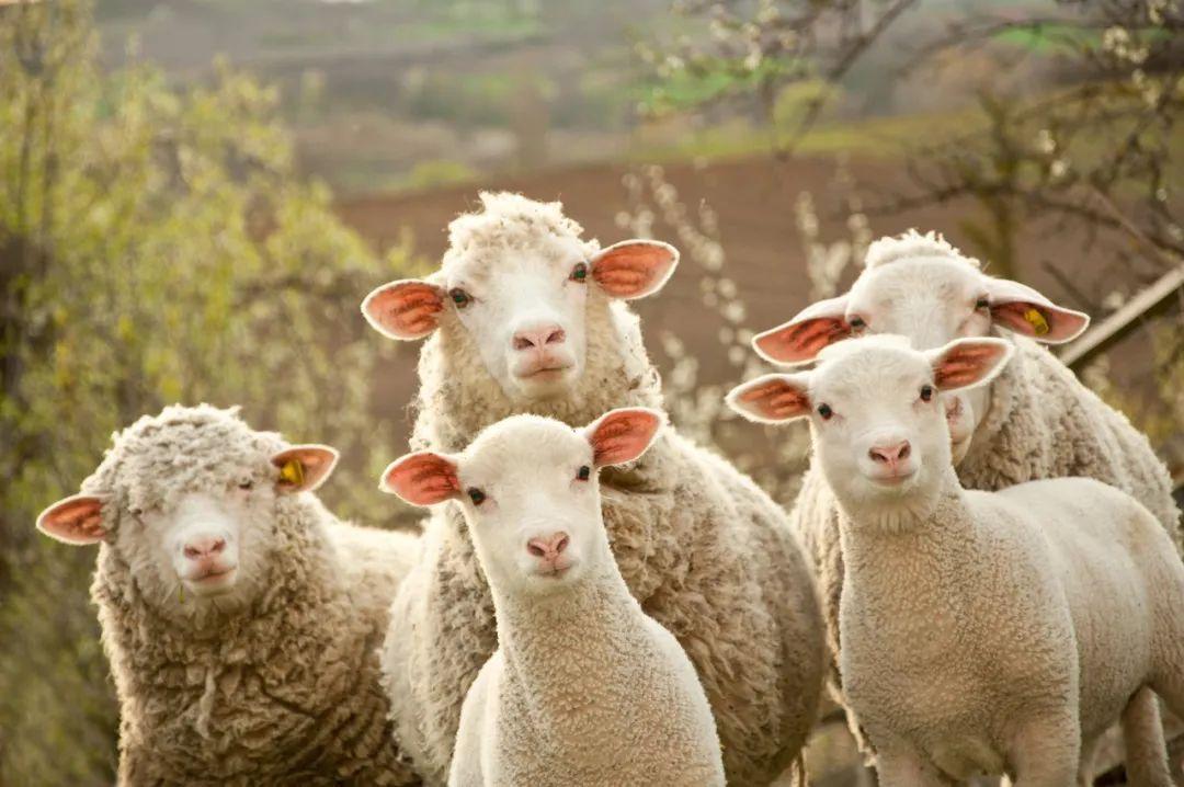 """惊呆!发现抵用券漏洞,两人疯狂""""薅羊毛""""获利770万!还有人一口气充100年会员,你敢信?"""