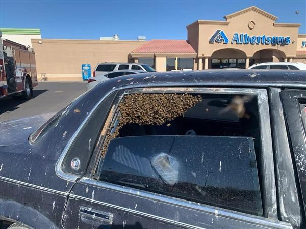 国外男子购物后驱车离开:意外发现后座被15000只蜜蜂占领了