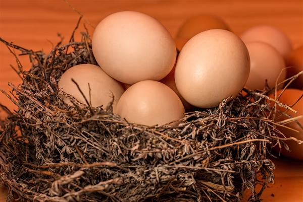 熟鸡蛋返生孵小鸡论文引热议 作者称利用超心理意识能量方法