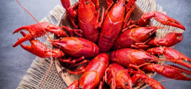 日本拟禁止进口小龙虾 | 悦读全球