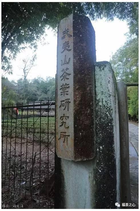 武夷星茶科所:六棵树,四两茶,两世纪