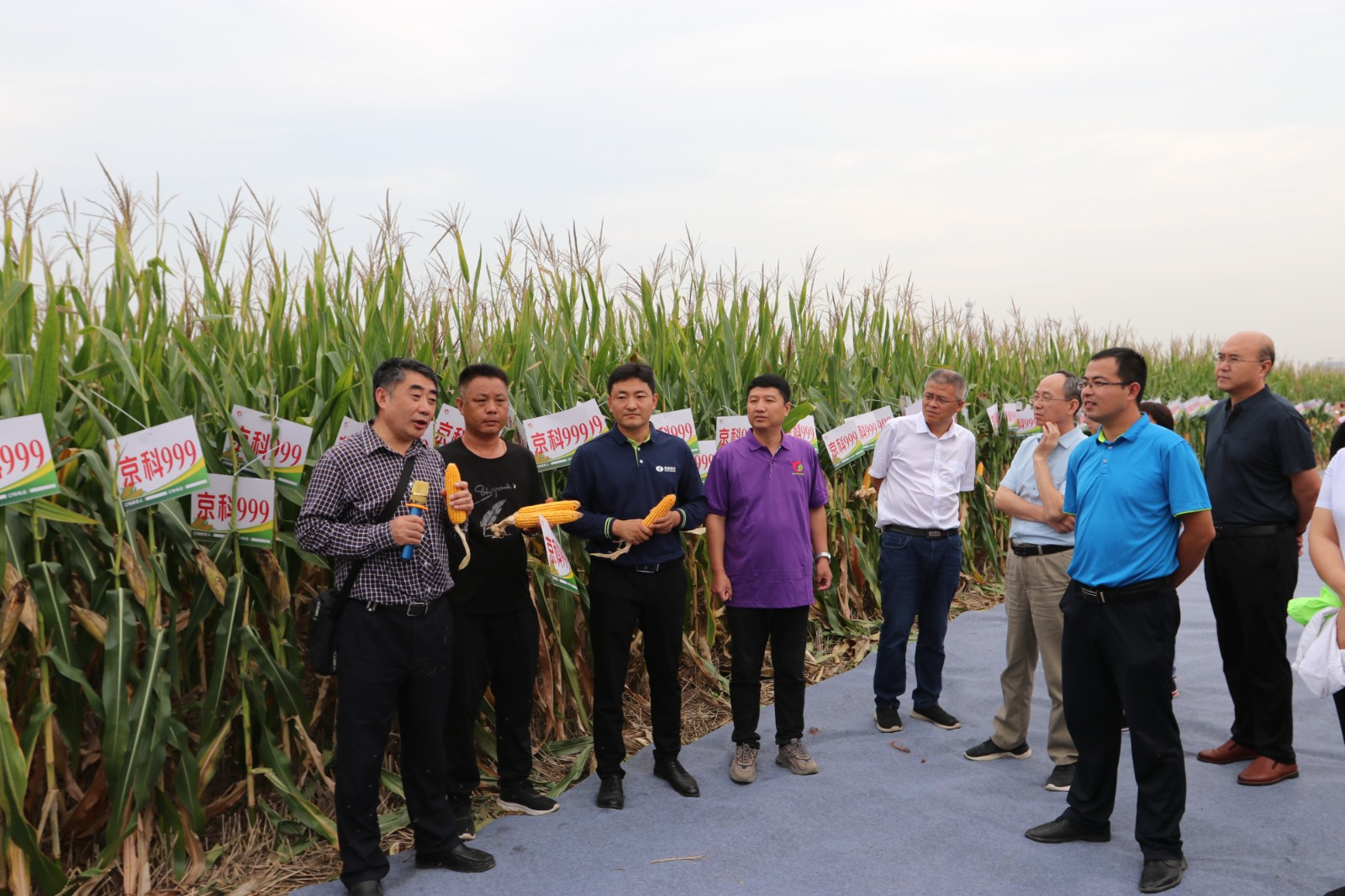 玉米品种MC121、京科999示范推广观摩活动举行